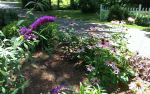 professional landscaping services you should have done in spring