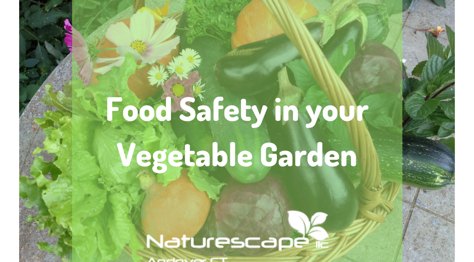 food safety in your vegetable garden