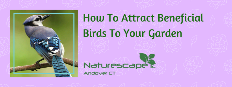 How to attract beneficial birds to your garden