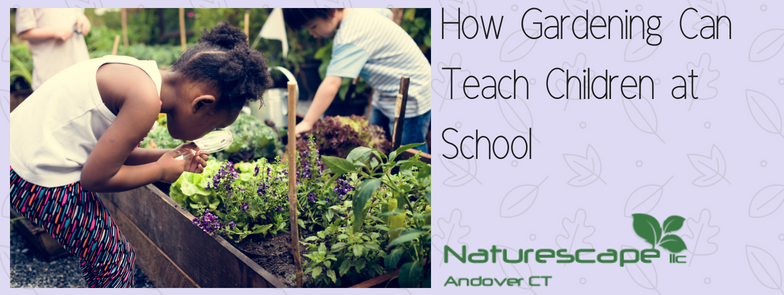 How Gardening can teach children at school