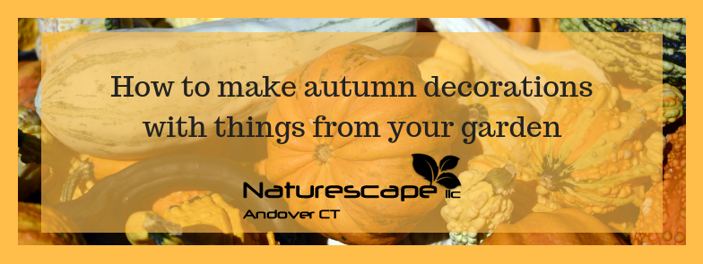 How to make autumn decorations with things from your garden