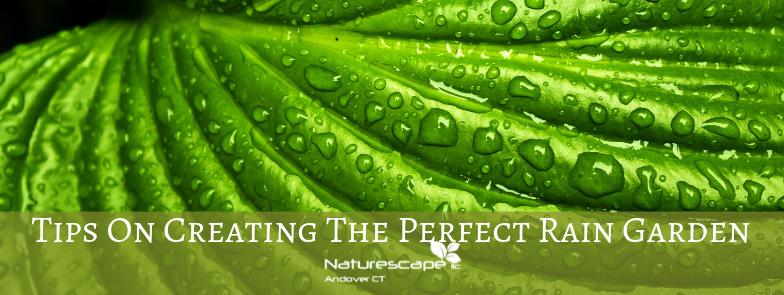 tips on creating the perfect rain garden