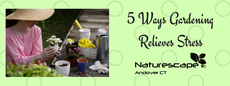 5 Ways Gardening Relieves Stress