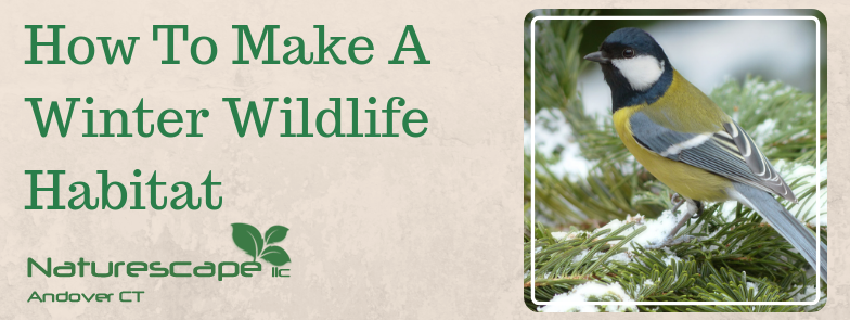 How To Make A Winter Wildlife Habitat