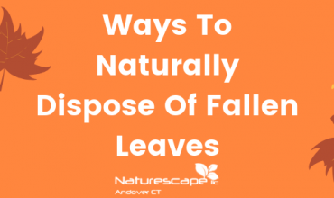 Ways To Naturally Dispose Of Fallen Leaves