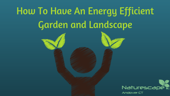 How To Have An Energy Efficient Garden and Landscape