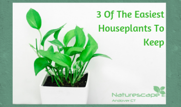 3 Of The Easiest Houseplants To Keep