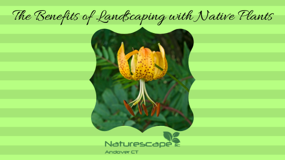 The Benefits of Landscaping with Native Plants