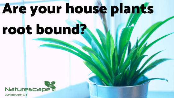 Are your house plants root bound?